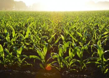 Boerensyndicaat koele minnaar van aankoop van landbouwgronden door Colruyt